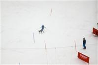 Горнолыжный спорт, женщины. Олимпиада в Сочи, Фото: 17