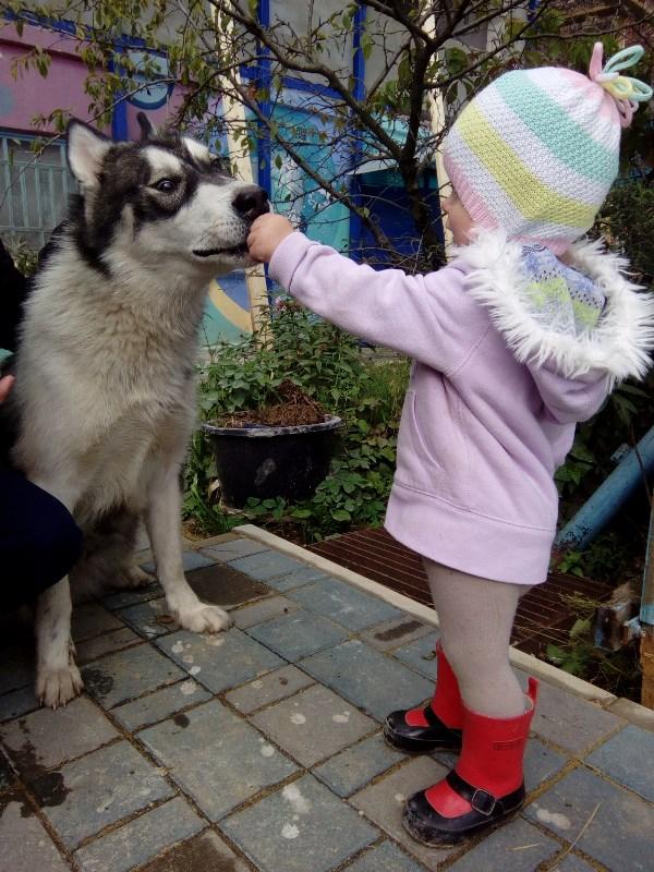 проверим ваши зубы товарищ волк!!!
