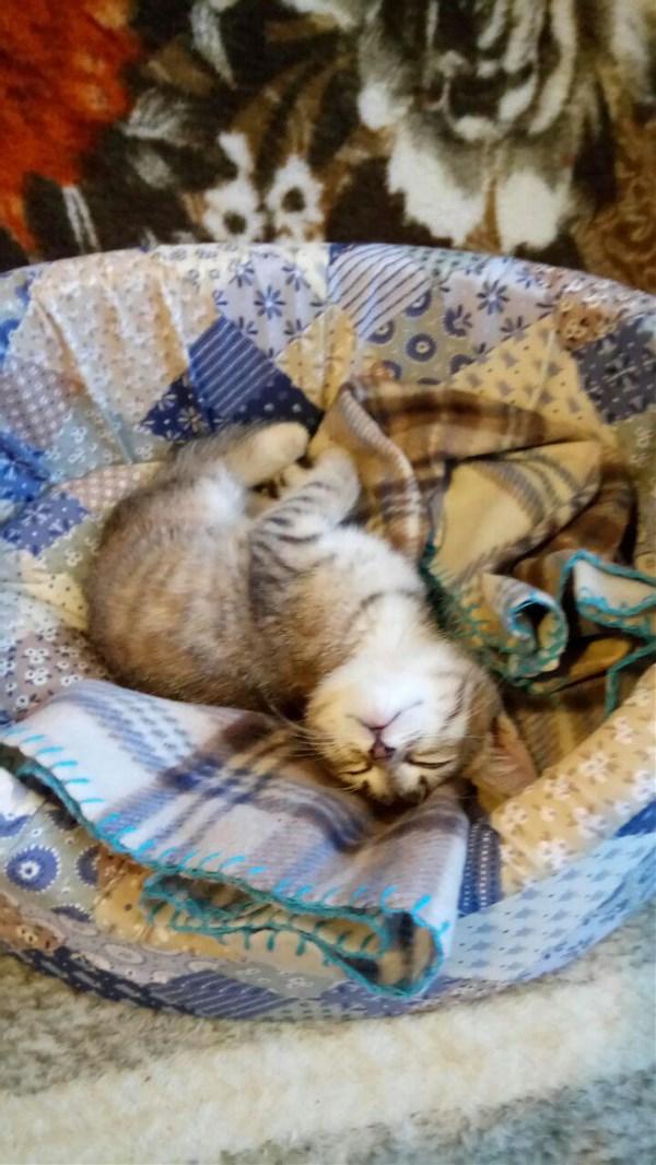 ...Вот и устал... и клубочком свернулся, Замер, затих и во сне встрепенулся. Спит наш малыш, наш пушистый бесёнок – Маленький, ласковый, милый котёнок!