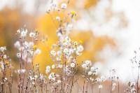 Золотая осень в Тульской области, Фото: 24