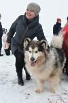 Праздник северных собак на Куликовом поле , Фото: 18
