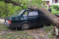 На автомобиль упало дерево, Фото: 7