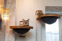 Экзотические животные в квартире, Фото: 1