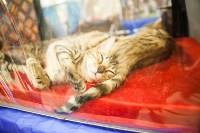 """Выставка """"Пряничные кошки"""". 15-16 августа 2015 года., Фото: 130"""