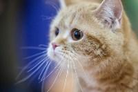В Туле прошла выставка «Пряничные кошки» , Фото: 105