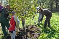 В Пролетарском районе высадили молодые деревья, Фото: 10