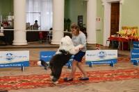 """Выставки собак в ДК """"Косогорец"""", Фото: 1"""