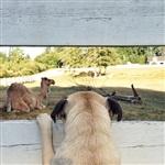 Фотогеничный пес Норм из Сиэтла, Фото: 5