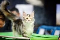 Выставка кошек. 4 и 5 апреля 2015 года в ГКЗ., Фото: 33
