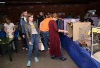 Выставка кошек в Искре, Фото: 25