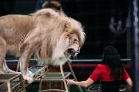 Львы Африки приехали в Тулу, Фото: 110