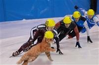 Олимпийские котики, Фото: 4