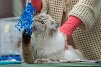 Выставка кошек в Туле, Фото: 18