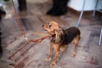 Выставка собак в Туле, 29.11.2015, Фото: 33