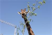 Цирк огромных зверей. Тула, Осиновая гора, 1, Фото: 4