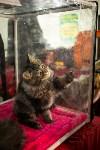 Пряничные кошки, Фото: 59