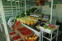 Рейд по незаконной продаже арбузов, Фото: 3