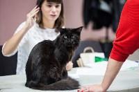 Выставка кошек в МАКСИ, Фото: 25