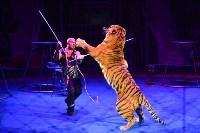 Цирковое шоу, Фото: 144