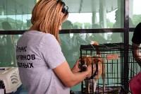 В тульском «Макси» прошел благотворительный фестиваль помощи животным, Фото: 22