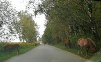 Табун лошадей у Сеженского леса, Фото: 2