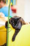 """Выставка """"Пряничные кошки"""". 15-16 августа 2015 года., Фото: 23"""