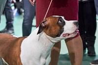 Выставка собак в Туле 26.01, Фото: 38