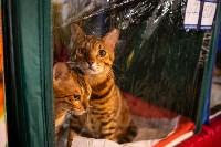 Пряничные кошки, Фото: 41