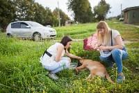 Спасение рядового пса, Фото: 5