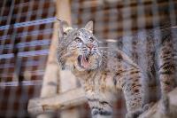 Куда свозить детей посмотреть на животных в 100 км от Тулы: обзор, Фото: 2