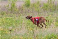 В Туле состоялись собачьи бега, Фото: 21