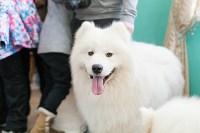 Выставка собак в Туле, 29.11.2015, Фото: 94