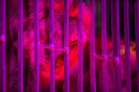 Шоу фонтанов «13 месяцев»: успей увидеть уникальную программу в Тульском цирке, Фото: 201