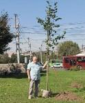 Высадка деревьев и растений ко Дню города, Фото: 7