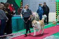 Выставка собак в Туле, Фото: 109