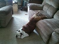 Кошки и собаки, проигравшие битву с мебелью, Фото: 28
