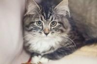 В Туле прошла выставка «Пряничные кошки» , Фото: 45