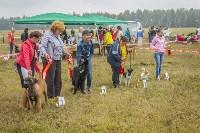 Международная выставка собак, Барсучок. 5.09.2015, Фото: 41