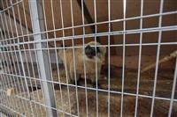 трогательный зоопарк, Фото: 12