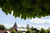 засохшие деревья на проспекте, Фото: 3