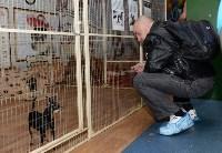 Выставка собак DogLand, Фото: 18