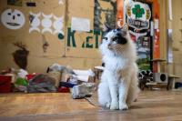 Волонтеры спасли кошек из адской квартиры, Фото: 27