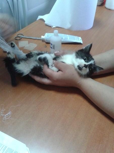Жорик. Маленький, но очень храбрый котейка, изрядно пожёванный собаками, который выжил вопреки всему...