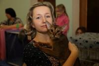 Выставка кошек. 21.12.2014, Фото: 34
