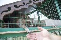 Зоопарк на набережной Упы в Туле, Фото: 8