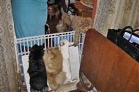 Похищенные собаки, Фото: 10