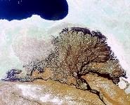Река Лена. Дельта, Фото: 4