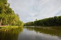 Запуск лебедей в верхний пруд Центрального парка Тулы, Фото: 4