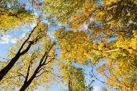 Золотая осень в Туле-2019, Фото: 35