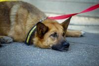 В Центральном парке Тулы проходит фестиваль помощи животным, Фото: 19